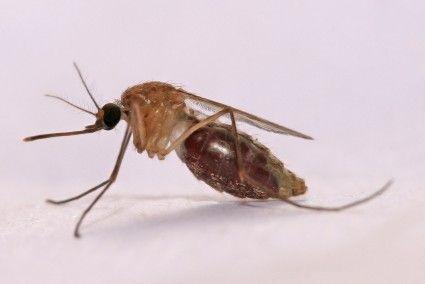 Blog de la Fundación Khanimambo - Ese puñetero mosquito
