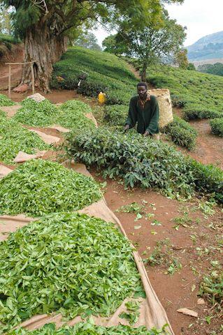 Blog de la Fundación Khanimambo - Mozambique, ¿Pasa hambre?