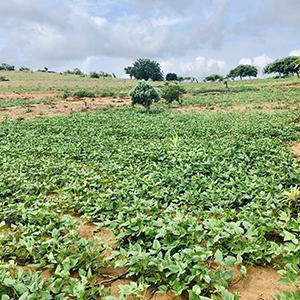 Humbi farm