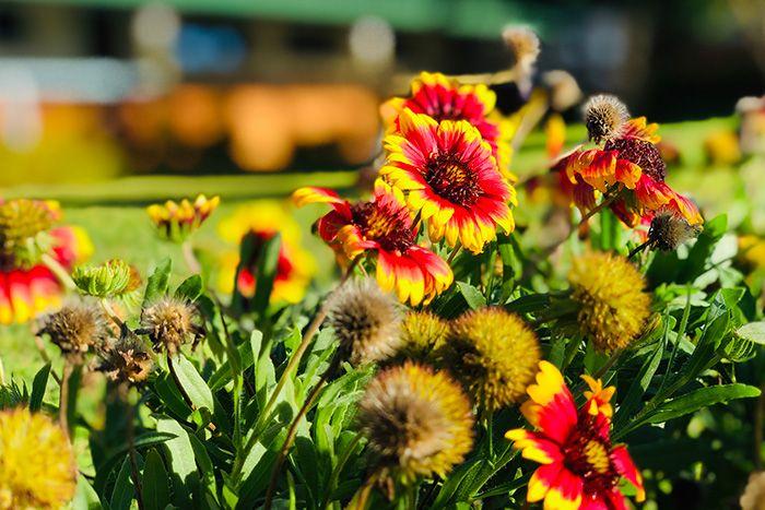 flores en el Centro Munti